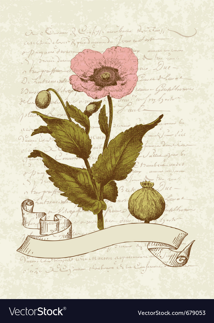 Vintage poppy card vector | Price: 1 Credit (USD $1)