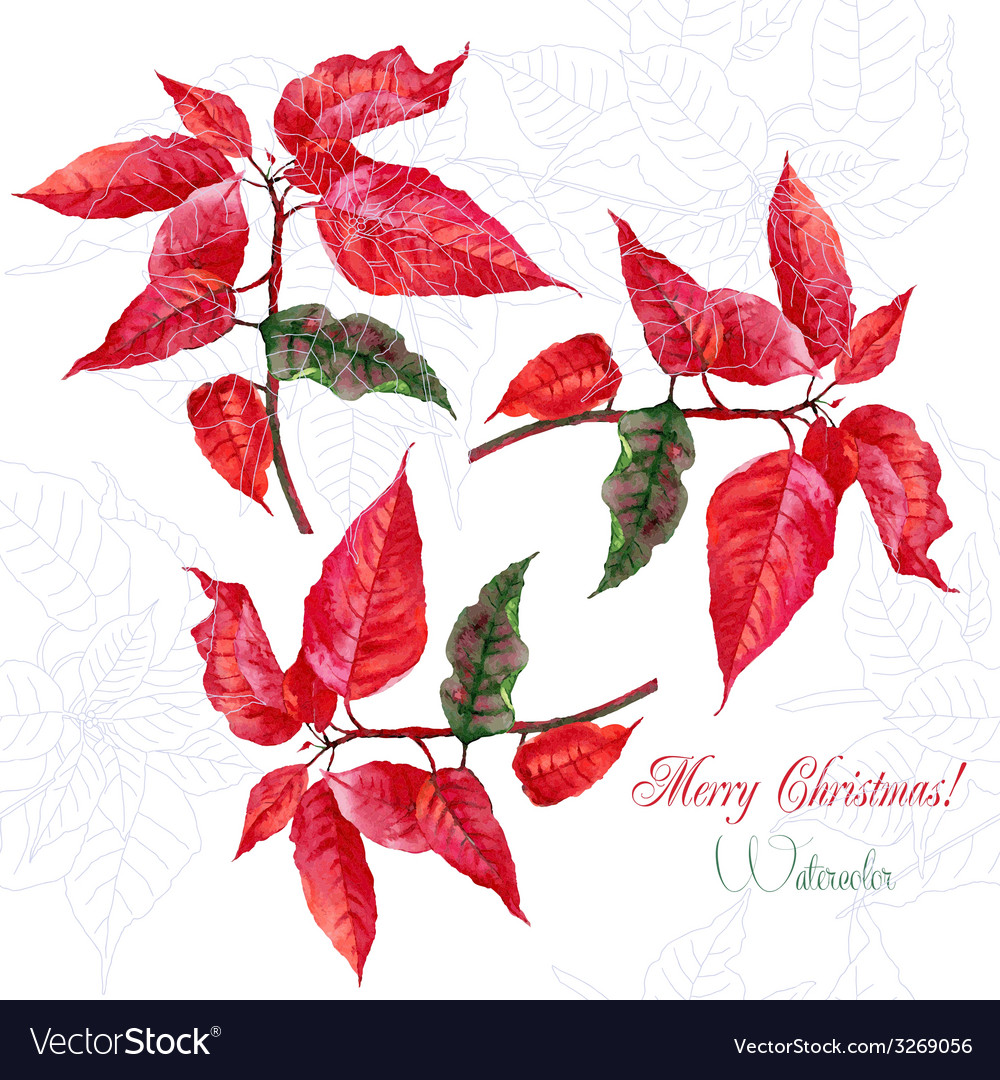 Background with red christmas poinsettia-05 vector | Price: 1 Credit (USD $1)