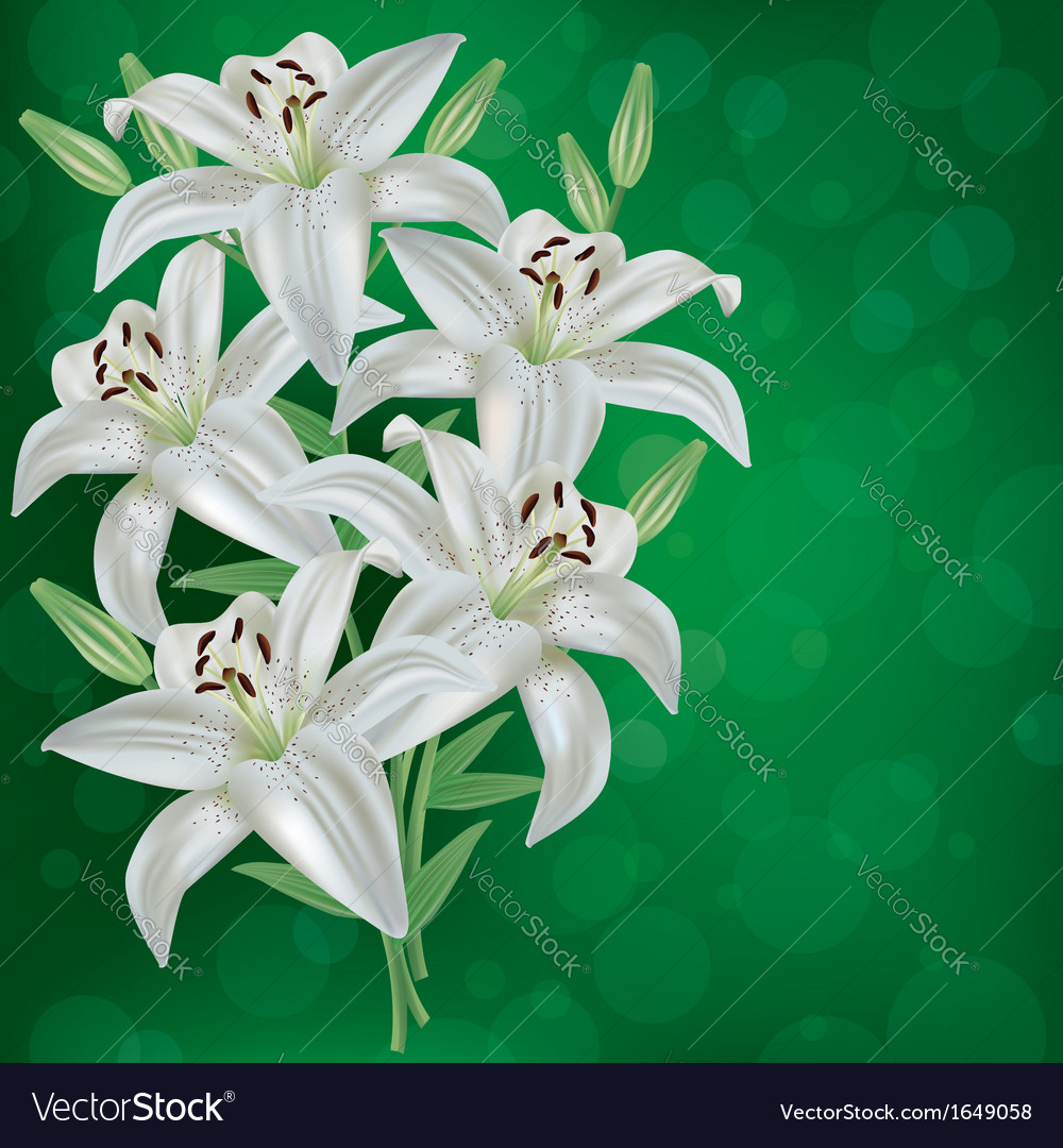 Greeting or invitation card with bouquet lily vector | Price: 1 Credit (USD $1)