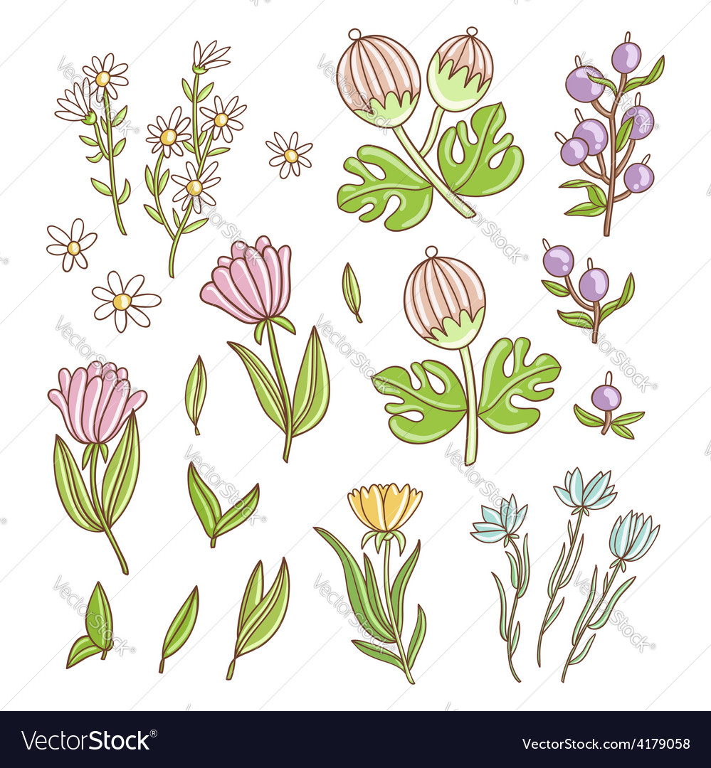 Isolated floral set vector | Price: 1 Credit (USD $1)
