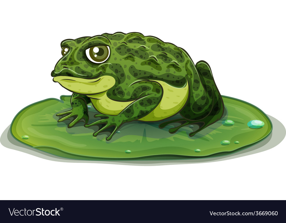 Frog vector | Price: 3 Credit (USD $3)