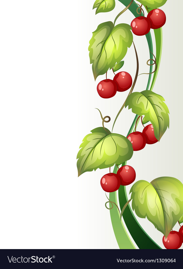 A vine plant with fruits vector | Price: 1 Credit (USD $1)