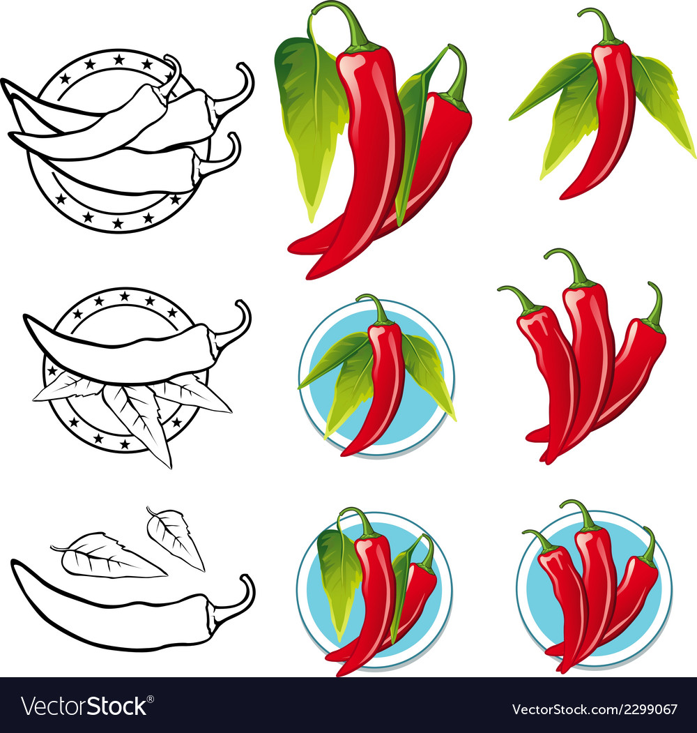 Chili pepper - vector | Price: 1 Credit (USD $1)