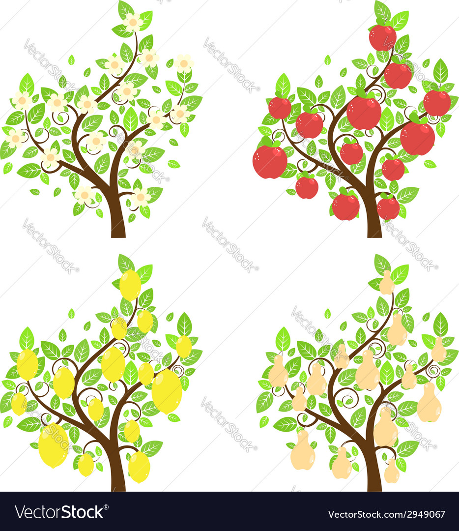 Stylized fruit trees2 vector | Price: 1 Credit (USD $1)