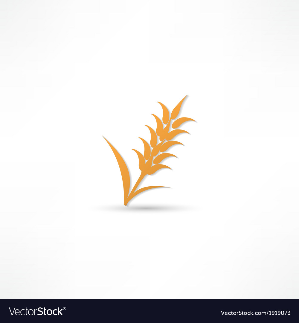 Ears of wheat barley or rye visual graphic icons vector | Price: 1 Credit (USD $1)