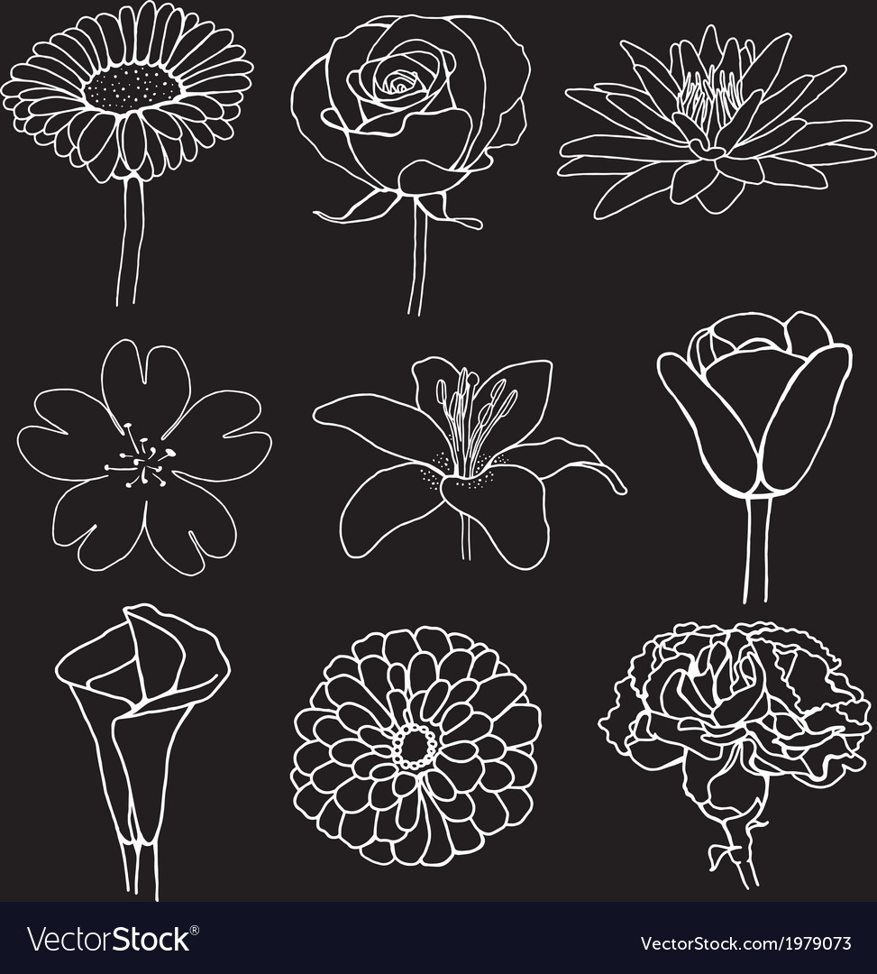 Flower sketch design vector | Price: 1 Credit (USD $1)