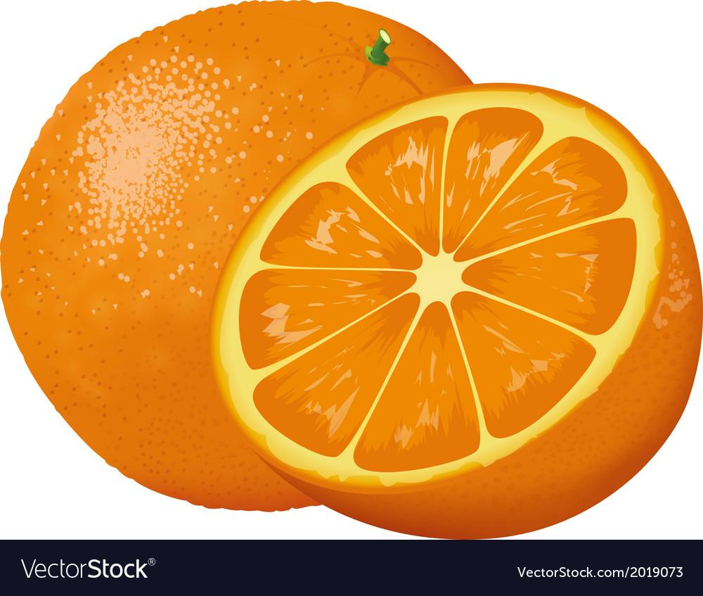 Orange vector   Price: 1 Credit (USD $1)