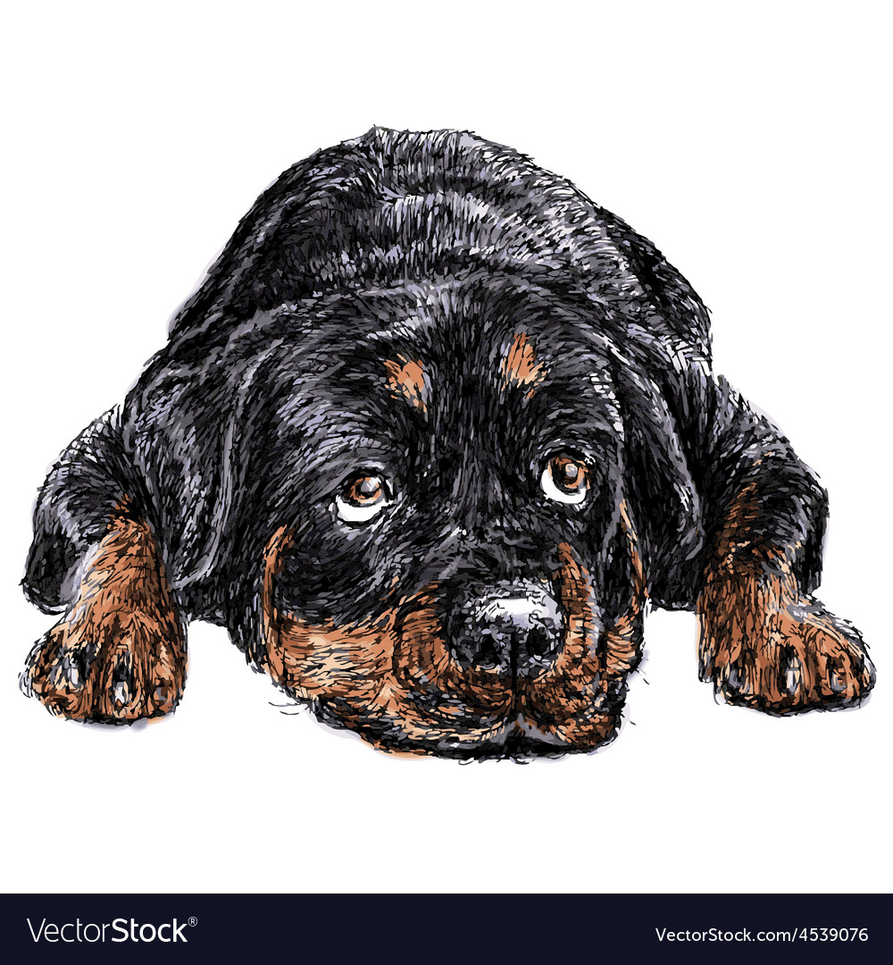 Rottweiler vector | Price: 3 Credit (USD $3)