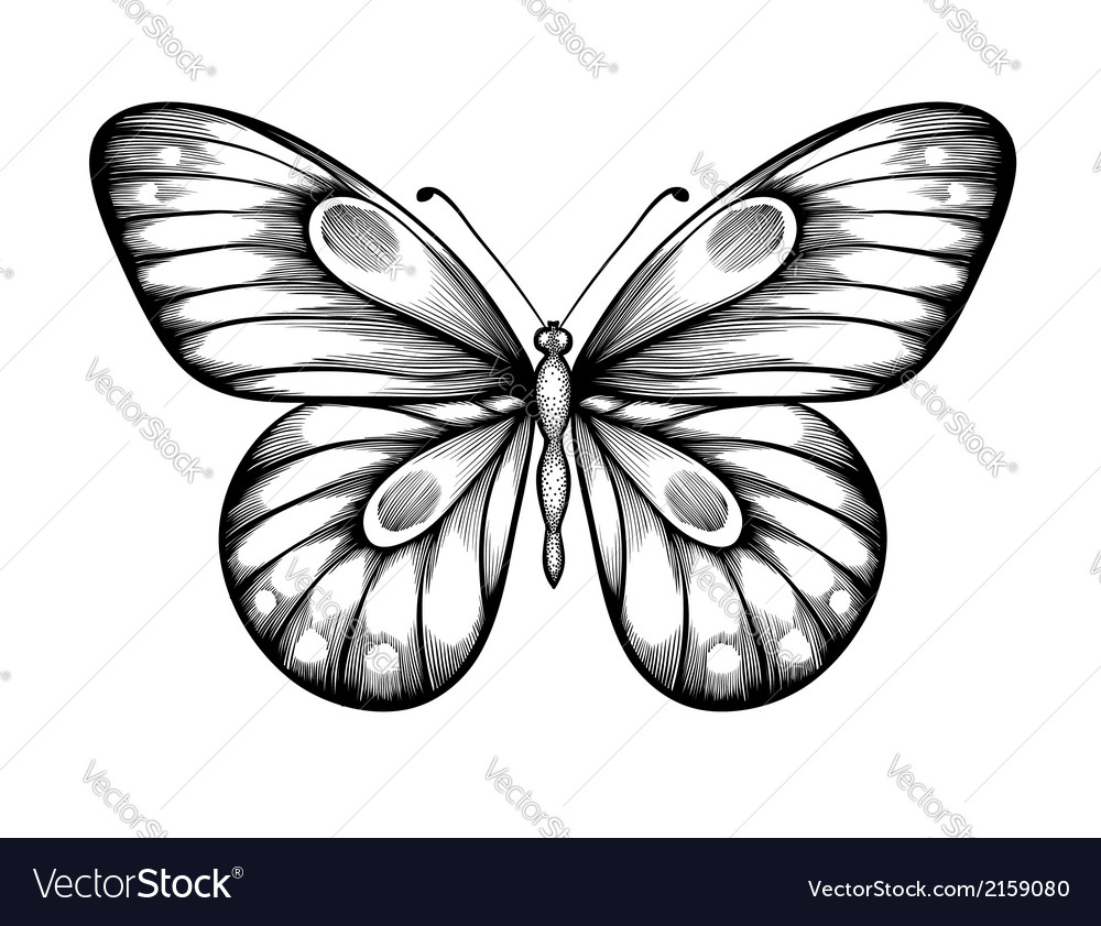 Black and white butterfly vector | Price: 1 Credit (USD $1)