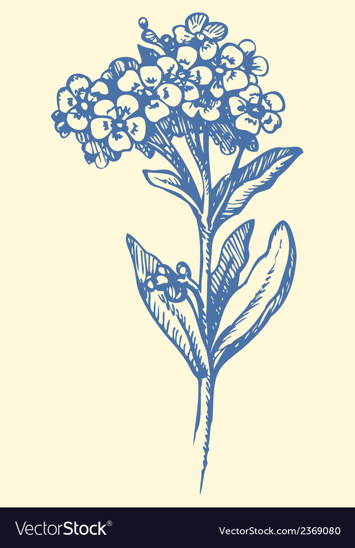 Forget me not vector | Price: 1 Credit (USD $1)