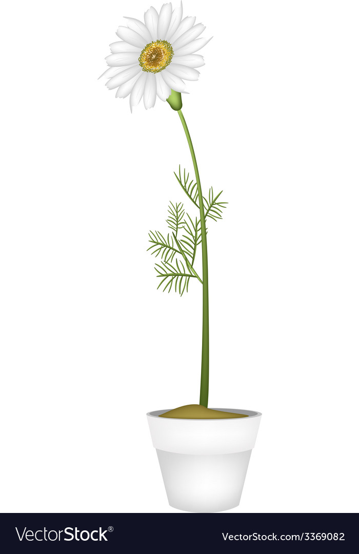 Lovely fresh chamomile in ceramic flower pot vector | Price: 1 Credit (USD $1)