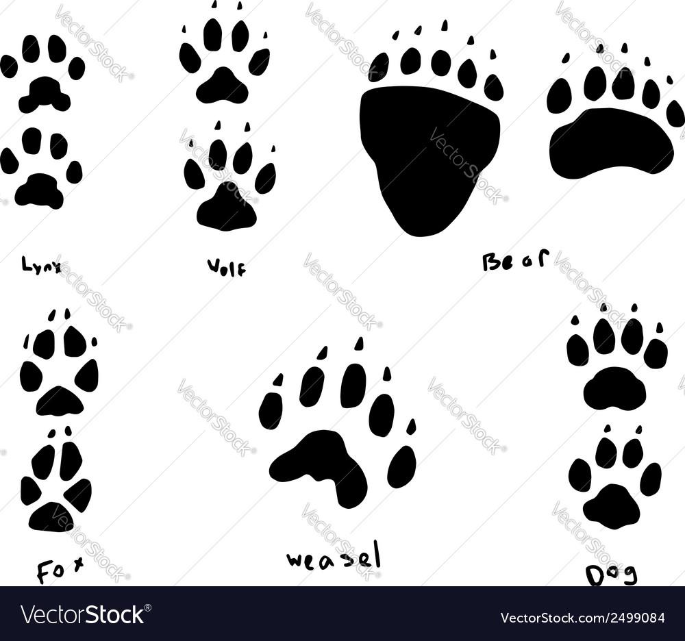 Animal tracks vector | Price: 1 Credit (USD $1)