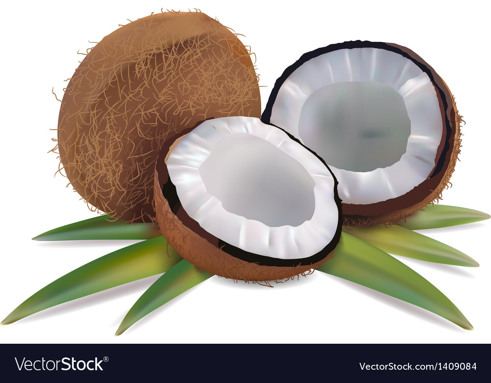 Coconut with leaves vector | Price: 3 Credit (USD $3)