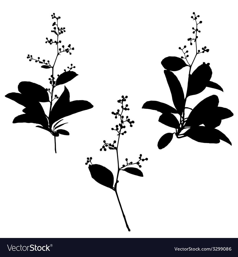 Black silhouettes flower vector | Price: 1 Credit (USD $1)