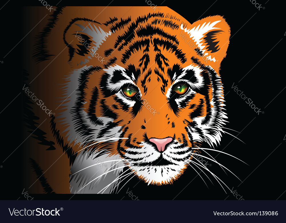 Tiger on black background vector | Price: 1 Credit (USD $1)