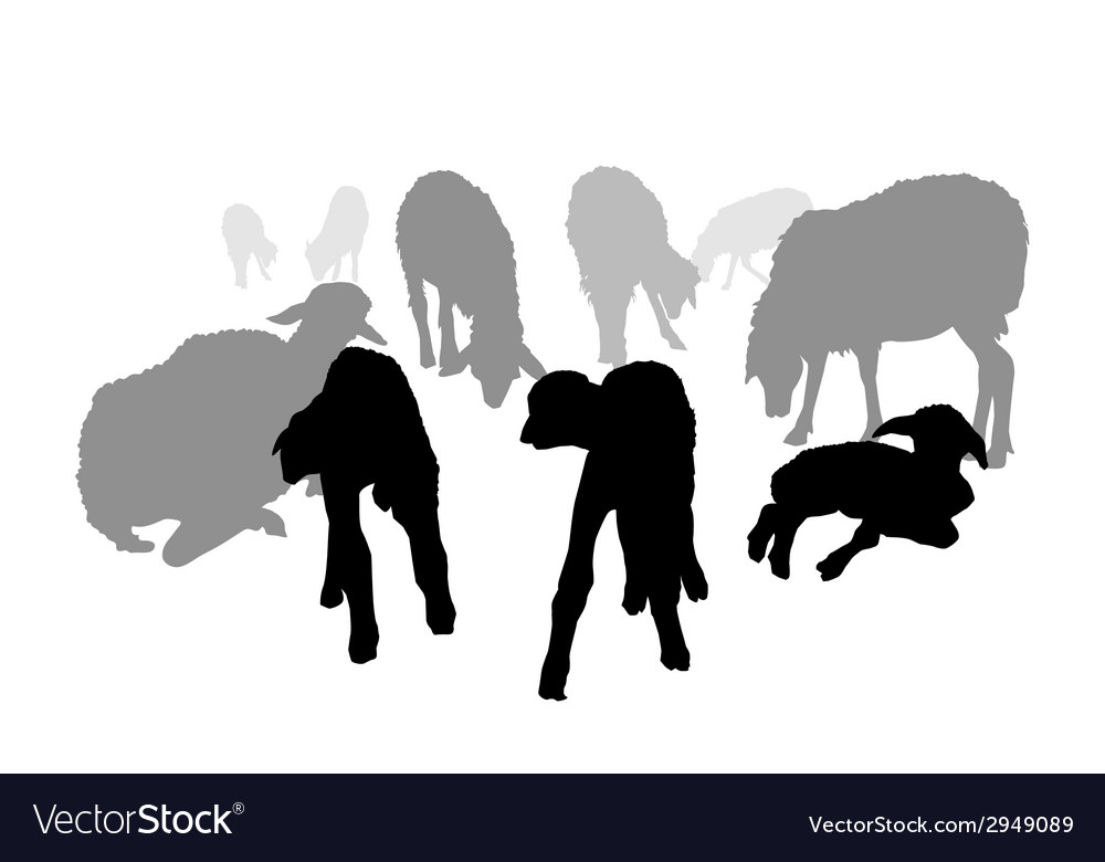 Sheep family vector | Price: 1 Credit (USD $1)