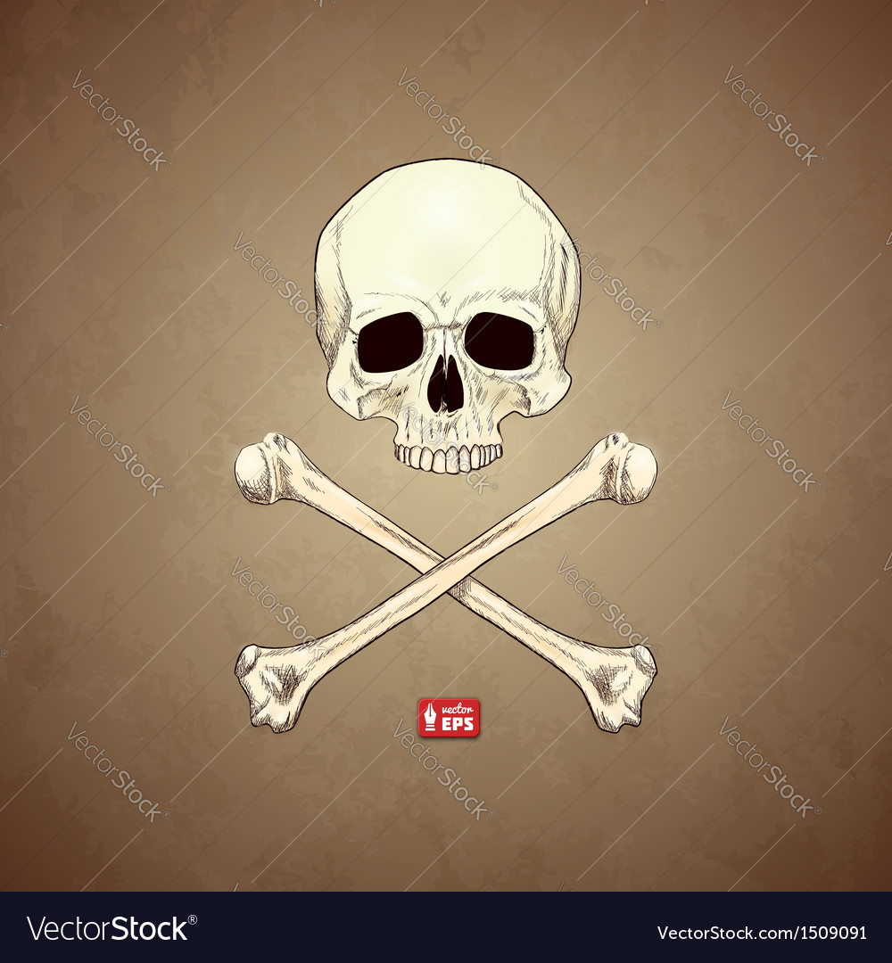 Human skull and bones on old paper background vector | Price: 1 Credit (USD $1)