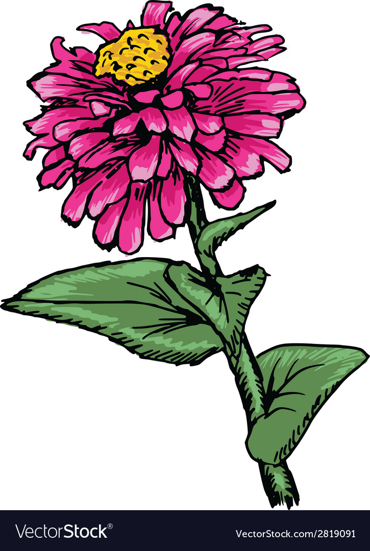 Zinnia vector | Price: 1 Credit (USD $1)