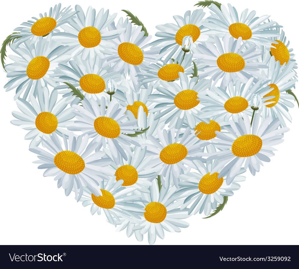 Heart made of white daisies vector | Price: 1 Credit (USD $1)