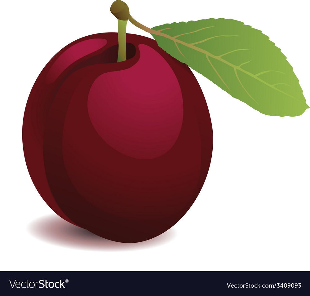 Plum with leaf vector | Price: 1 Credit (USD $1)