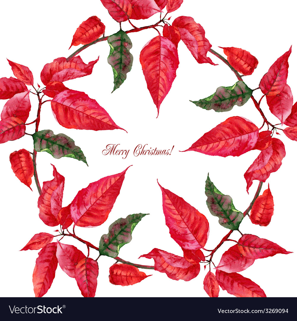 Background with red poinsettia3-07 vector | Price: 1 Credit (USD $1)