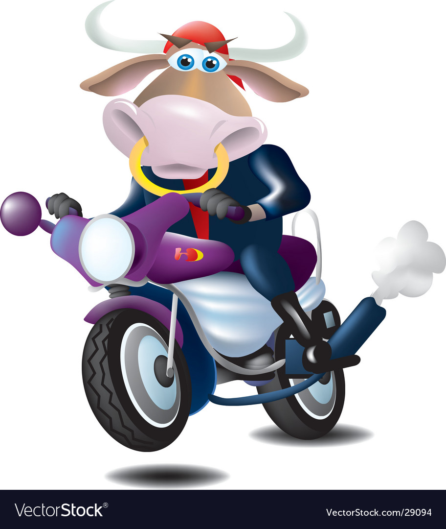 Bull on a motorcycle vector | Price:  Credit (USD $)