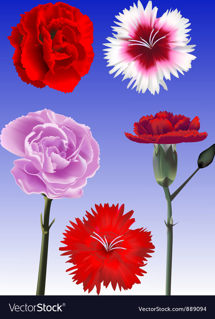 Carnation collection vector | Price: 3 Credit (USD $3)