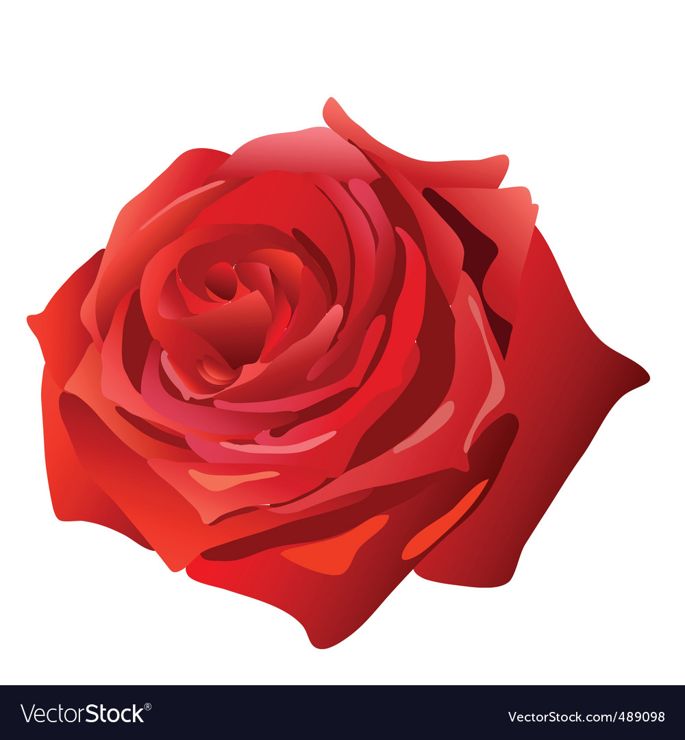 Red rose vector | Price: 1 Credit (USD $1)