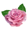 Realistic rose on a white background vector