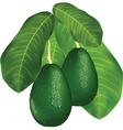 Avocado branches vector