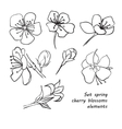 Set of spring cherry blossom flowers hand drawing vector