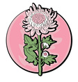 Chrysanthemum clip art vector