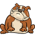 English bulldog dog cartoon vector