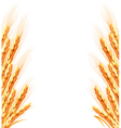 Ears of wheat background vector