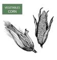 Corn-set of vector