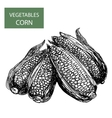 Corn-set of vector