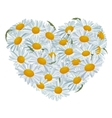 Heart made of white daisies vector