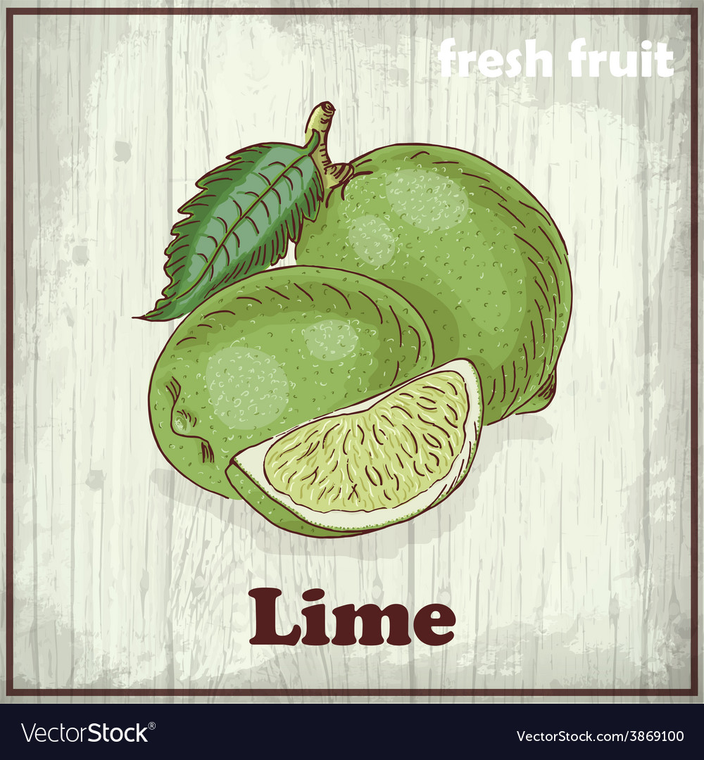 Fresh fruit sketch background vintage hand vector | Price: 1 Credit (USD $1)