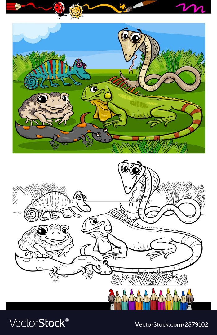 Reptiles and amphibians coloring book vector | Price: 1 Credit (USD $1)