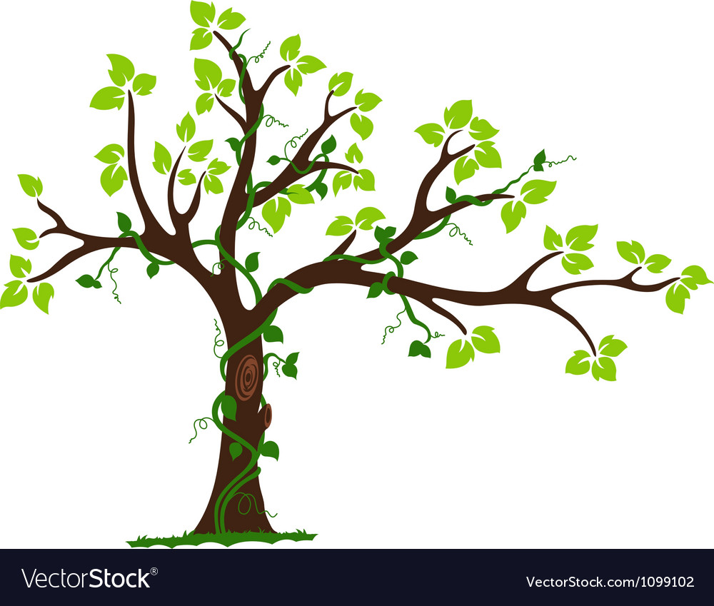 Tree with liana and vine vector | Price: 1 Credit (USD $1)