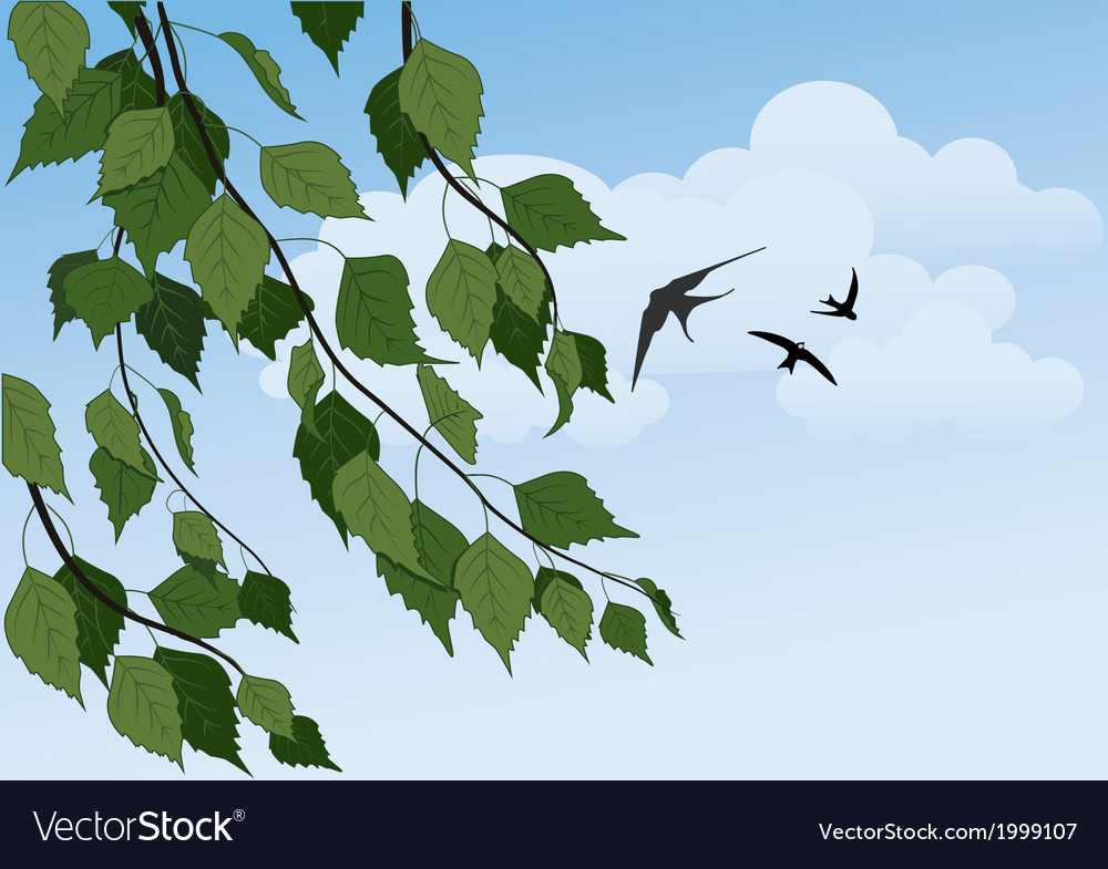 Birch branches and swallows vector | Price: 1 Credit (USD $1)