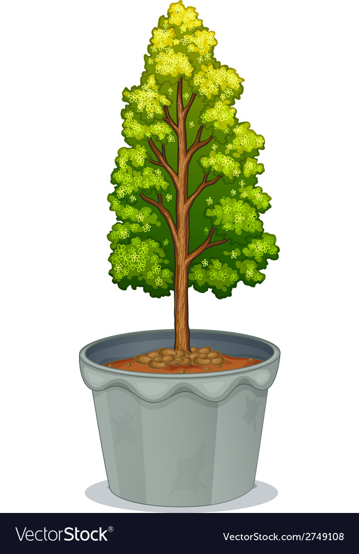 A plant in a pot vector | Price: 1 Credit (USD $1)