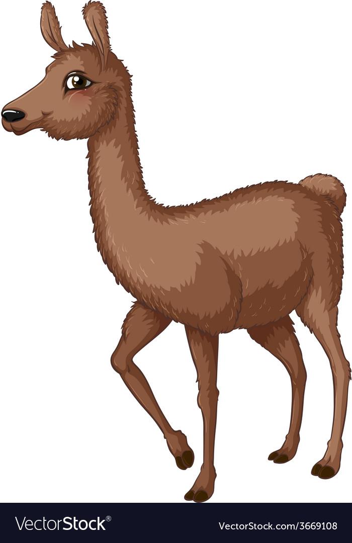 Lama vector | Price: 3 Credit (USD $3)
