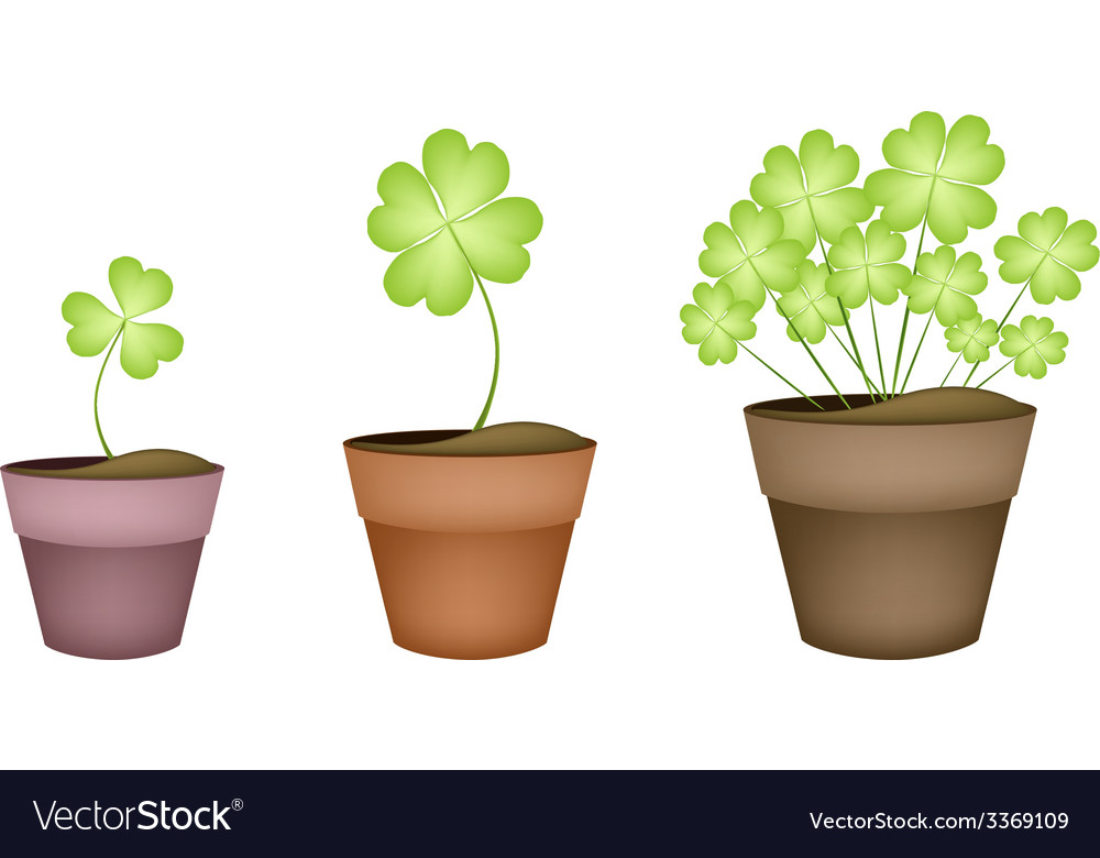 Four leaf clovers in three ceramic pots vector | Price: 1 Credit (USD $1)