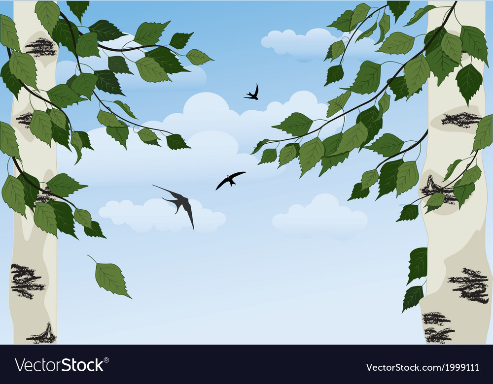Birch on sky background vector | Price: 1 Credit (USD $1)