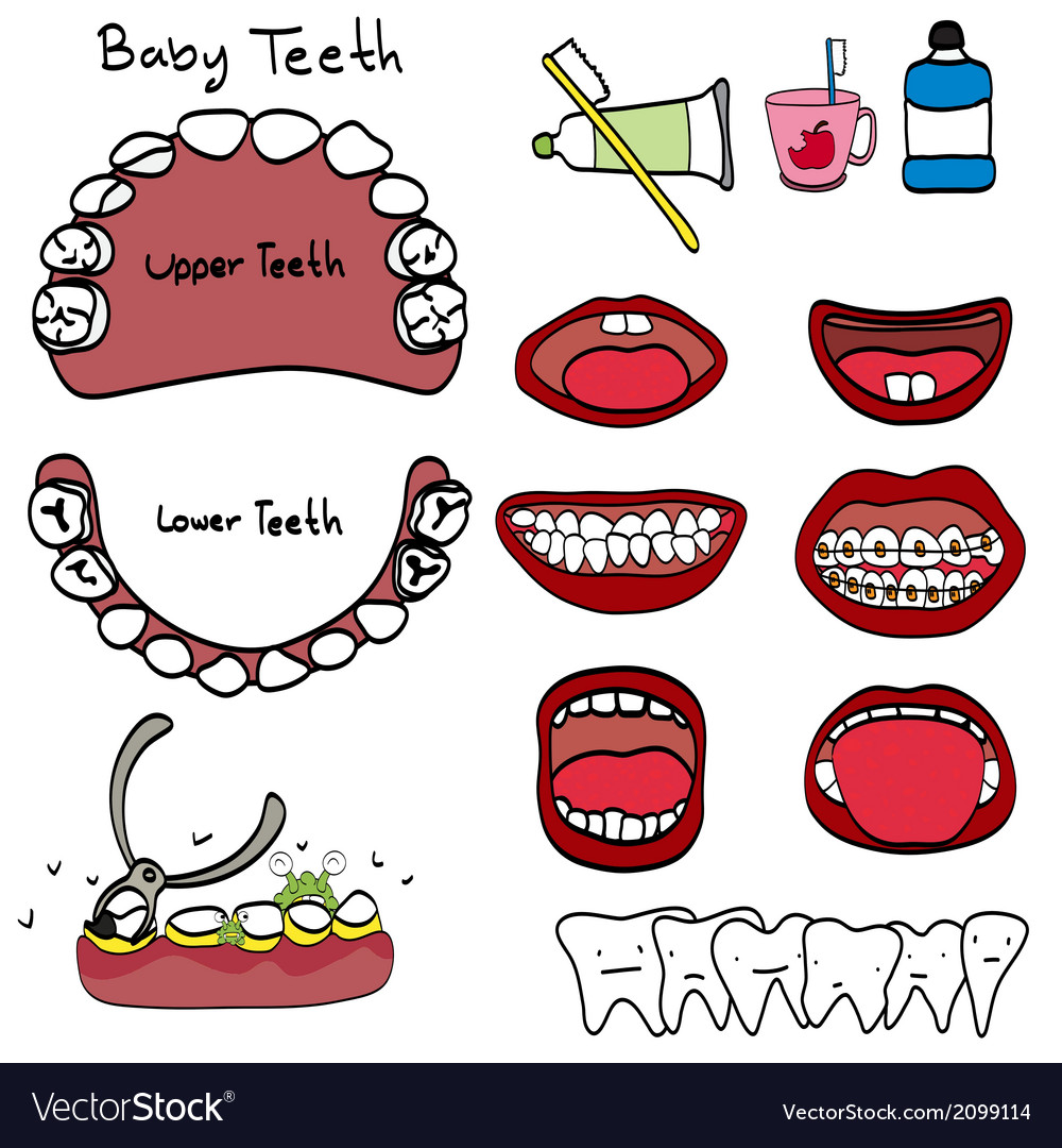 Dental vector | Price: 1 Credit (USD $1)