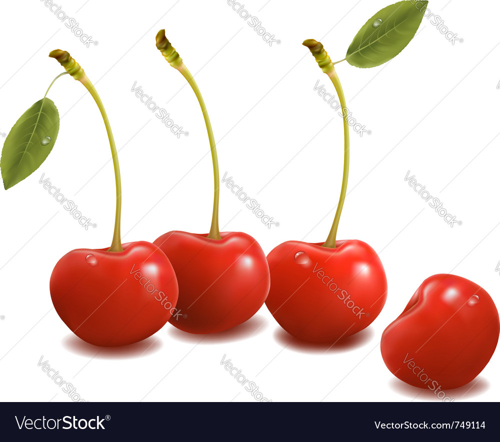 Sweet cherries with leaves vector | Price: 1 Credit (USD $1)