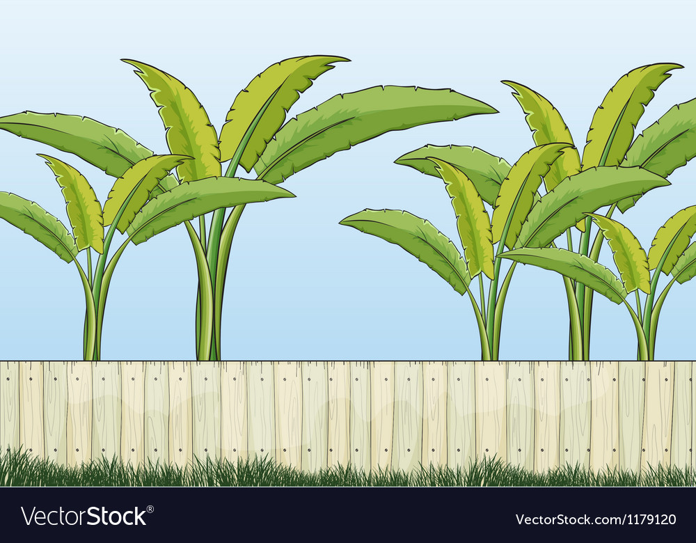 Banana plants and a fence vector | Price: 1 Credit (USD $1)