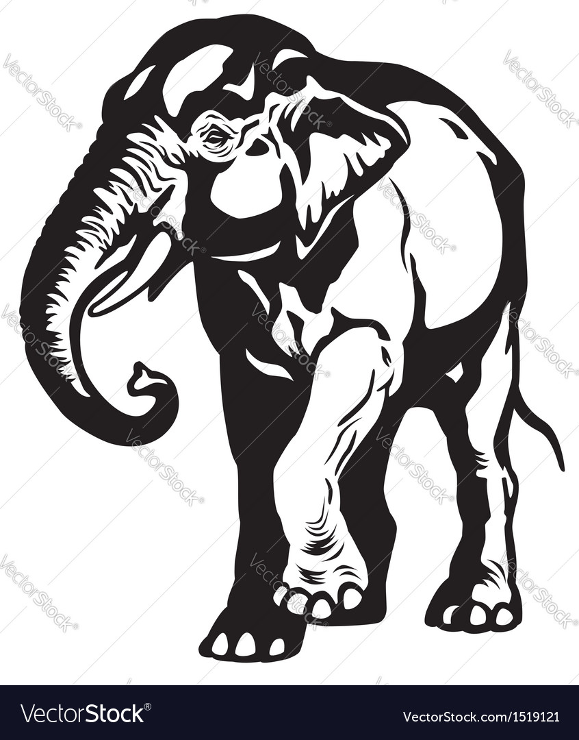 Asian elephant black white vector | Price: 1 Credit (USD $1)
