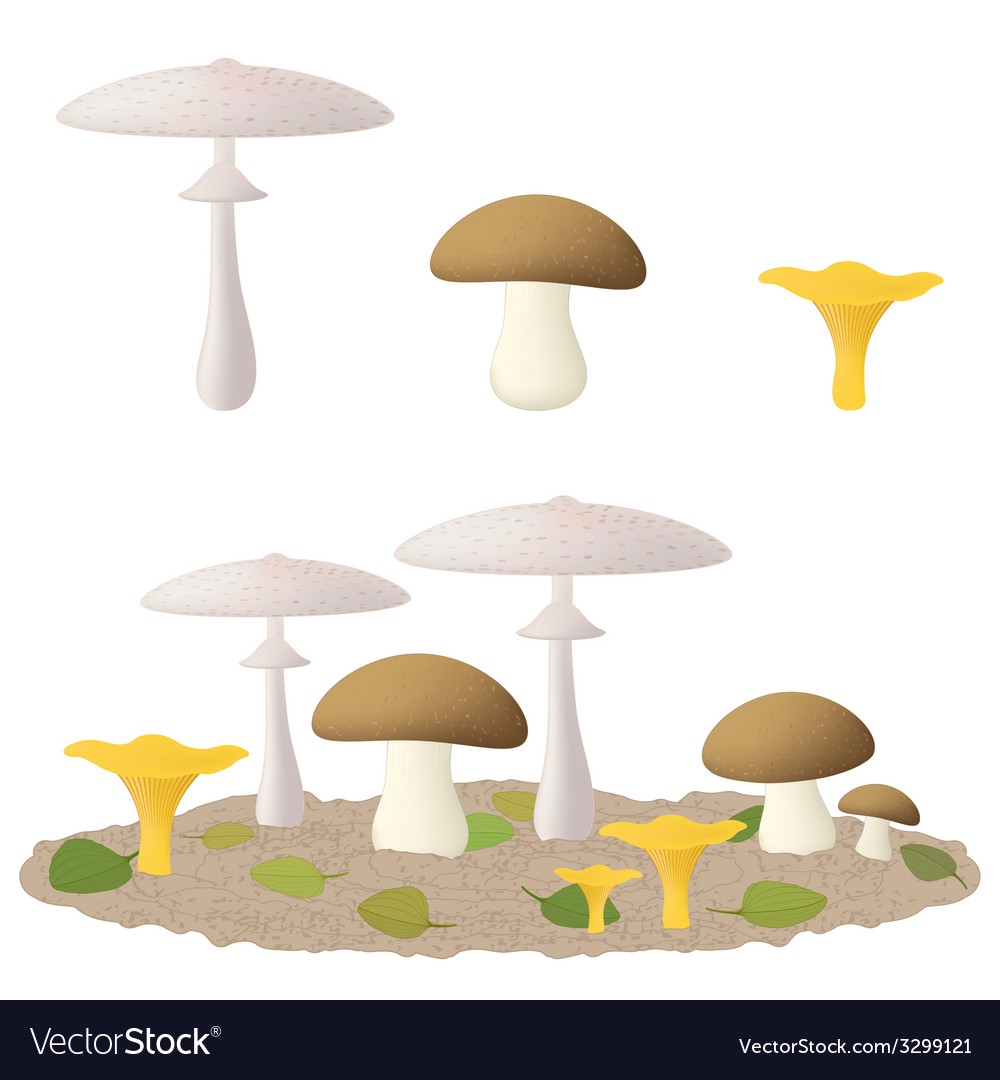 Edible mushrooms vector | Price: 1 Credit (USD $1)